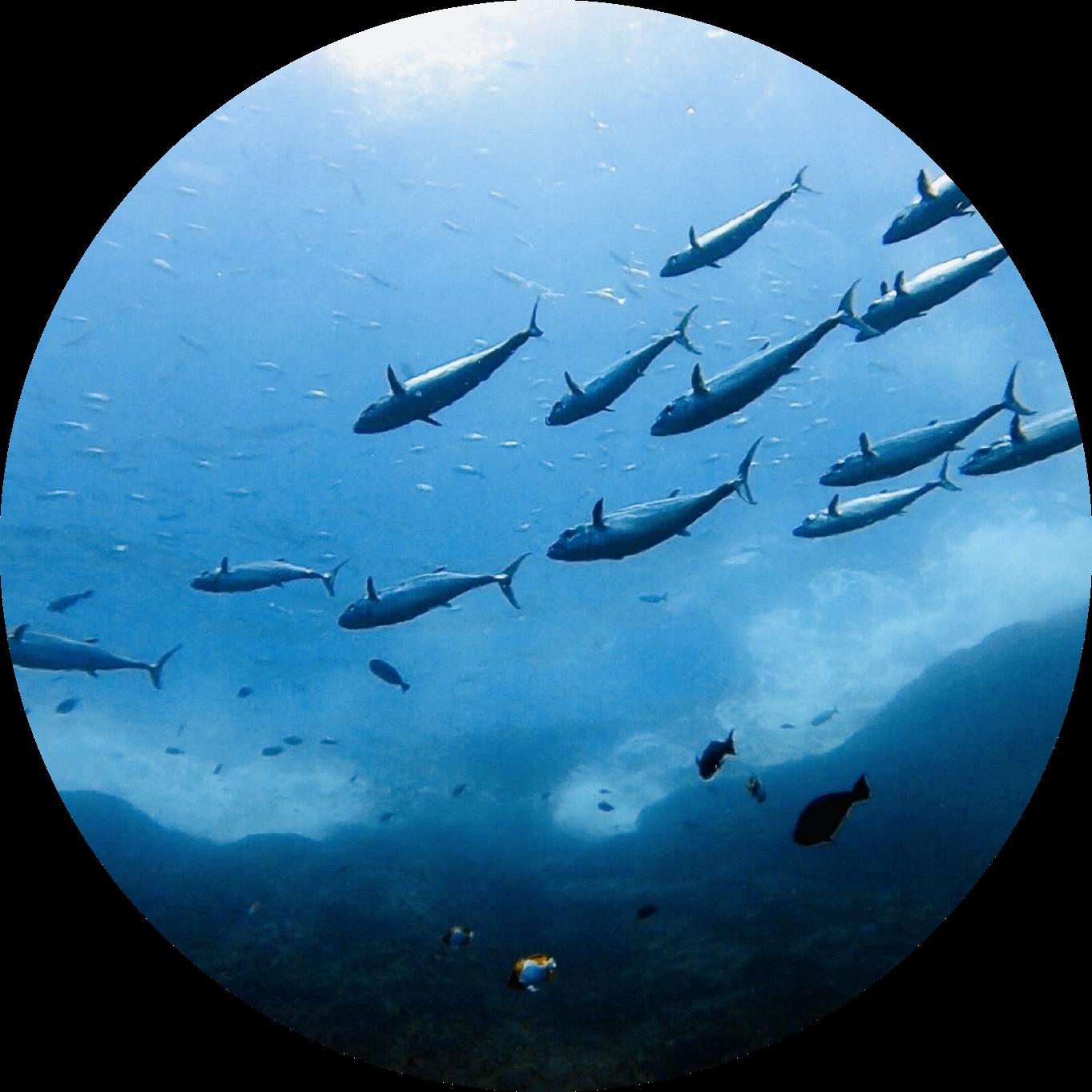貴重な海洋資源を守るための活動